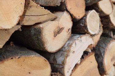tronchi_legno